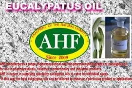 Eucalypatus Globeless Oil